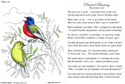 Field Guide for the Birds - Plate 16 -  by Taylor Jones