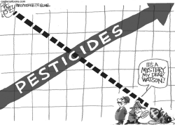 Case of the Murdered Bees by Pat Bagley