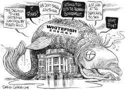 White House and WhiteFish by Daryl Cagle