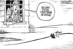 First Robin of Spring by Joe Heller