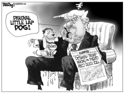Disloyal Lap Dog FLORIDA by Bill Day