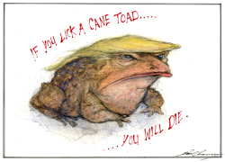 Donald Trump as a Cane toad by Dale Cummings