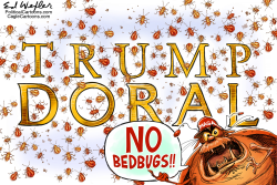 Doral Bedbugs by Ed Wexler
