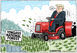 Mowing Down the Tongass by Wolverton