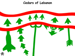 cedars of lebenon  by Emad Hajjaj
